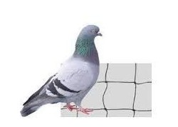 10x10m Filet Noir Anti Pigeon, Maille 50