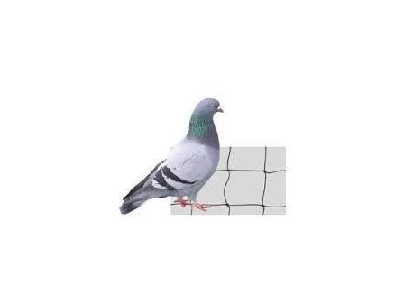 2x2m Filet Noir Anti Pigeon, Maille 50