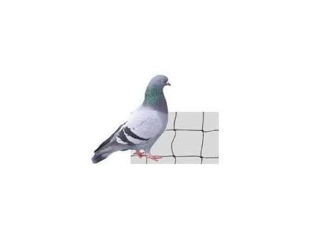 10x10m Filet Noir Anti Pigeon, Maille 50
